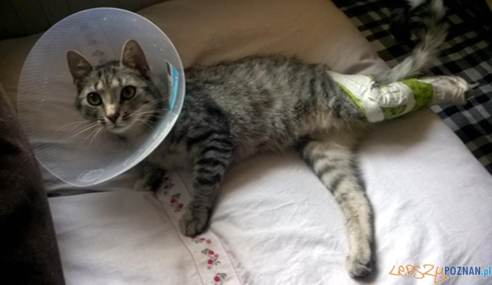 Kto znęca się nad bezdomnymi kotami z Suchego Lasu?  Foto: UG Suchy Las