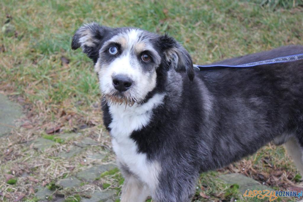 Jeden z kejtrów, który trafił po Sylwestrze  Foto: Schronisko dla zwierząt w Poznaniu