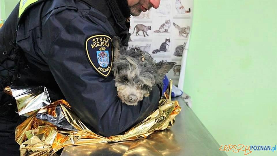 Pies znaleziony pod gruzami kamienicy - rokowania są ostrożne  Foto: Schronisko dla zwierząt w Poznaniu