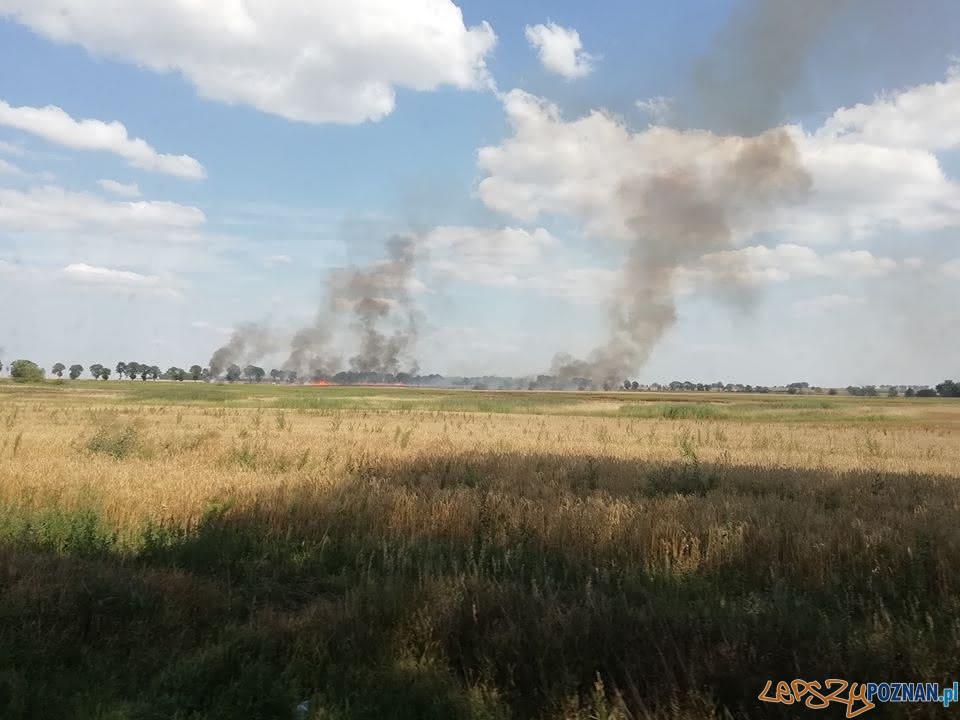 Płoną pola, płoną uprawy  Foto: OSP Skoki / dh Adam Świętek