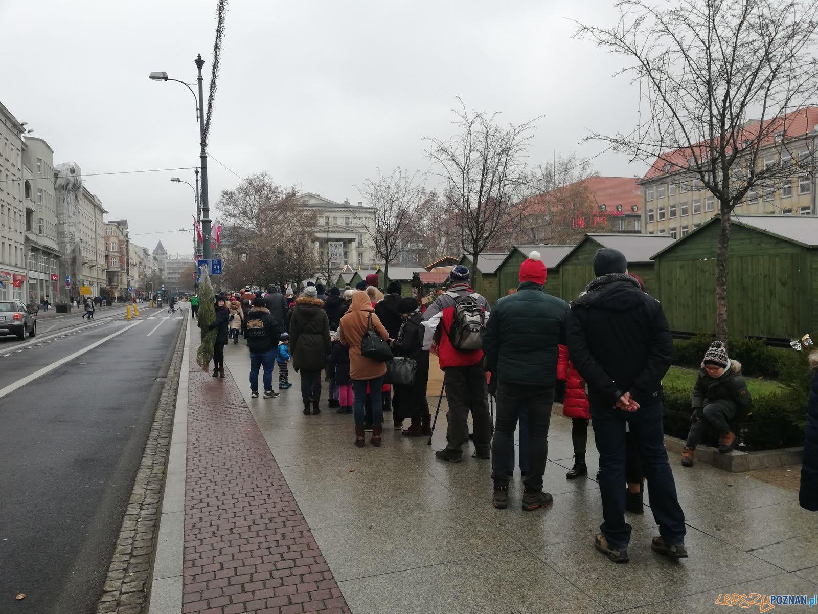 Choinki od RMF FM - Plac Wolności  Foto: