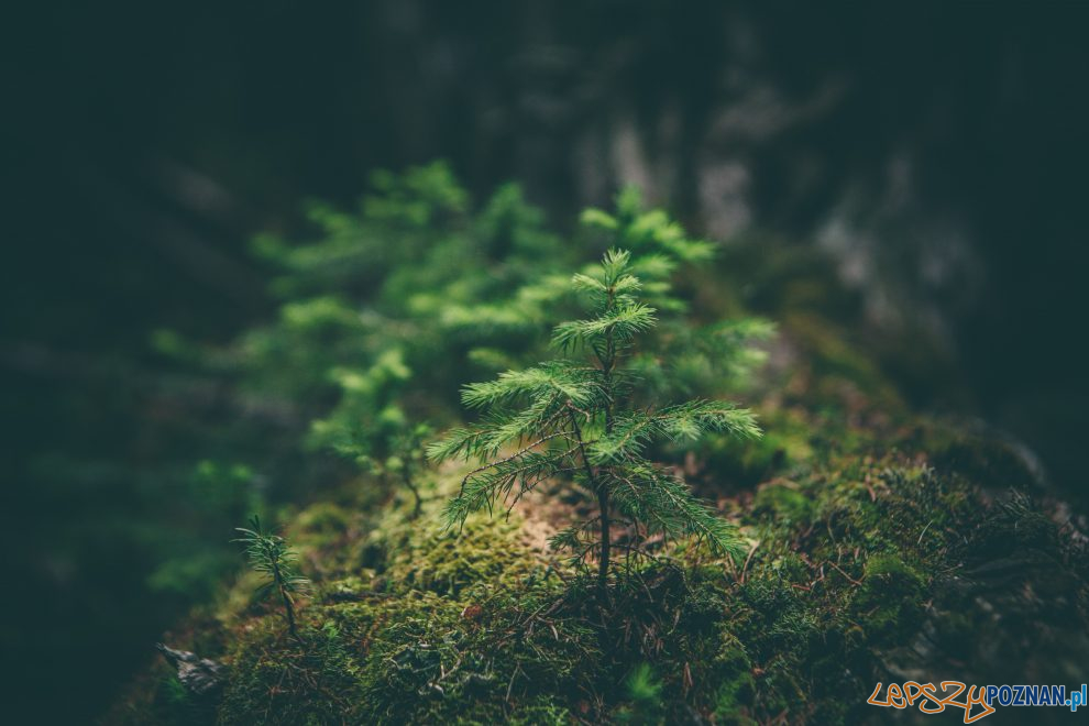 drzewko  Foto: Matthew Smith