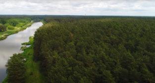 Krótki film o kąpielach leśnych  Foto: Kadr z filmu